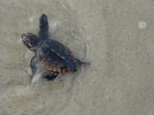 turtle6